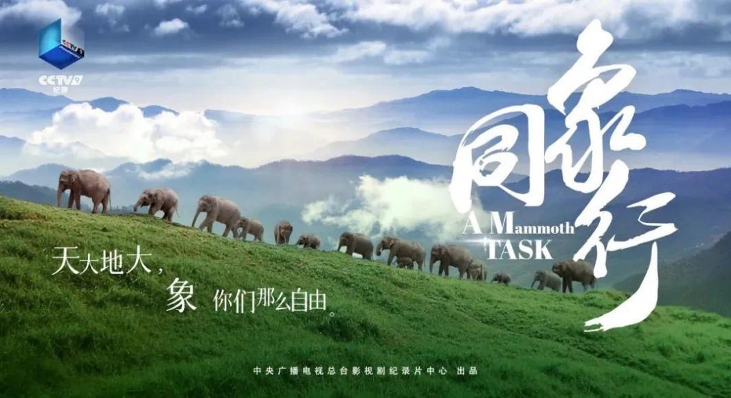 """《同象行》:一部大象去哪�旱摹肮�路片"""" (1).jpg"""