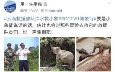 """《同象行》:一部大象去哪�旱摹肮�路片"""" (8).jpg"""