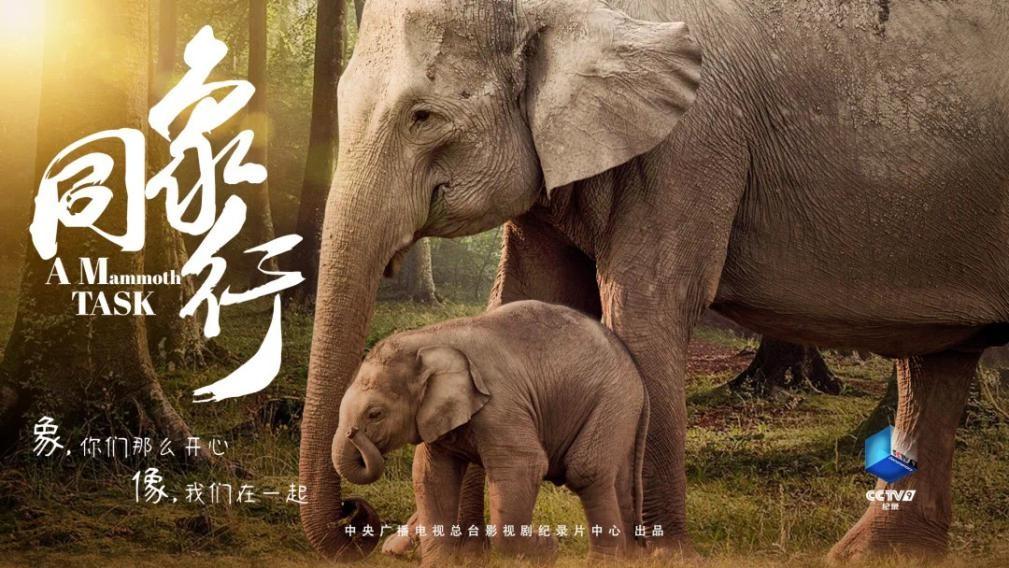 """《同象行》:一部大象去哪�旱摹肮�路片"""" (9).jpg"""