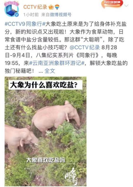 """《同象行》:一部大象去哪�旱摹肮�路片"""" (14).jpg"""