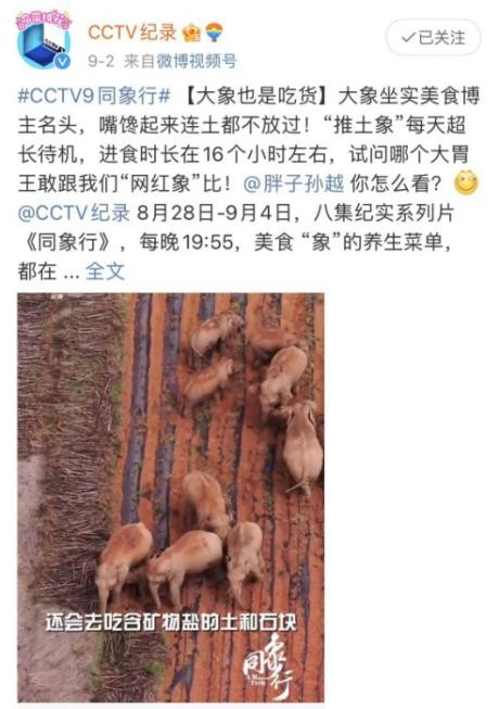 """《同象行》:一部大象去哪�旱摹肮�路片"""" (15).jpg"""