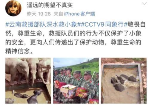 """《同象行》:一部大象去哪�旱摹肮�路片"""" (18).jpg"""
