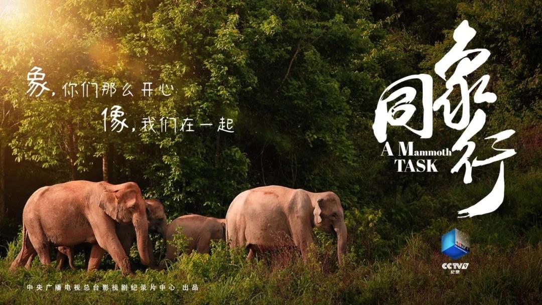 """《同象行》:一部大象去哪�旱摹肮�路片"""" (22).jpg"""