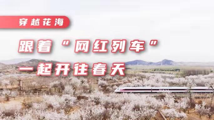 """打卡最美春色丨探秘S5线沿途美景 看""""网红列车""""穿越最美花海"""